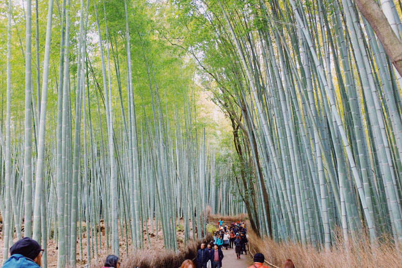Tourists walking through a path with bamboo trees swaying in the wind in the Bamboo Grove in Arashiyama, Kyoto (Japan).