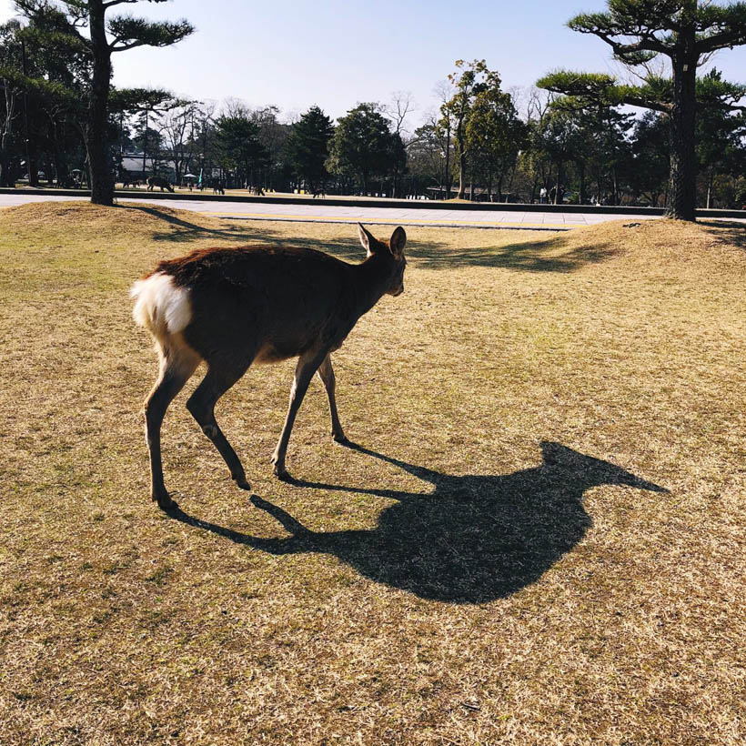 Another deer roaming in the park.