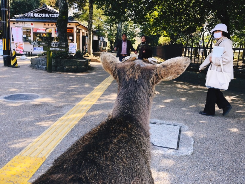 The deer also roam around the city sometimes.