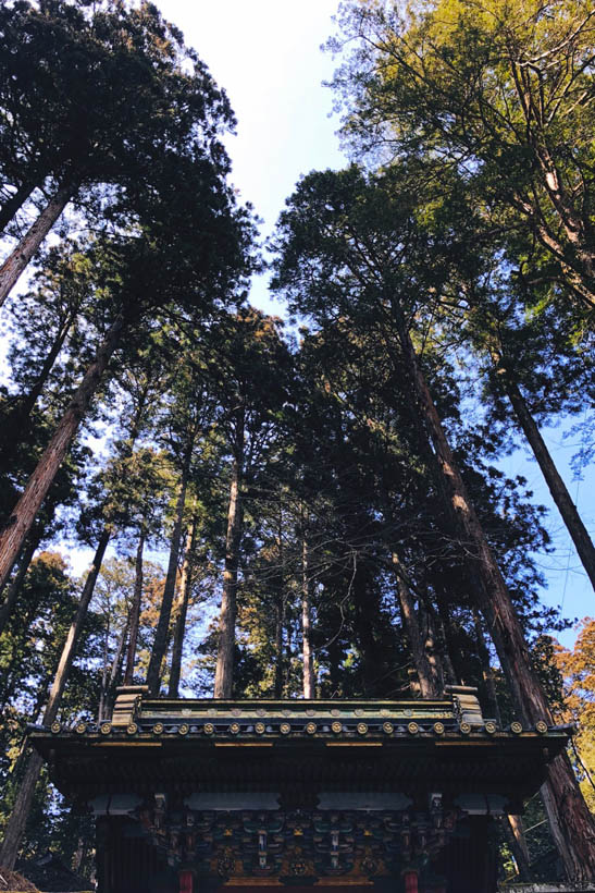 The shrine is surrounded by trees.