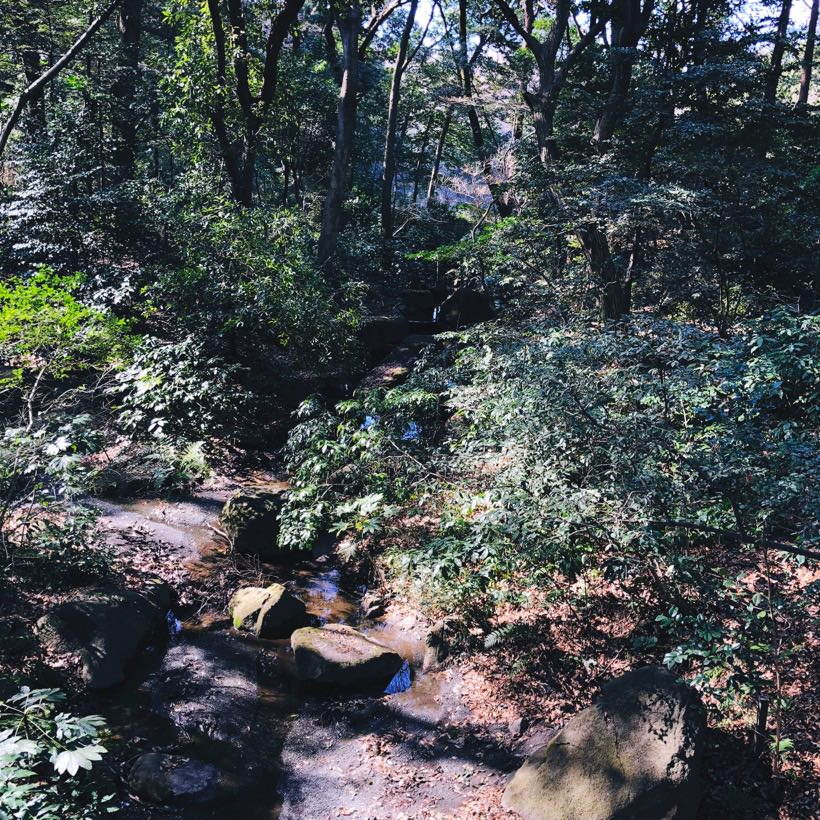 One of the many small rivers running through the park.